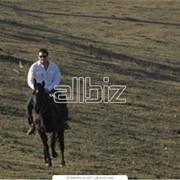Прогулки конные фото