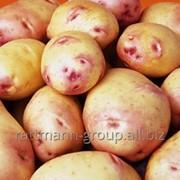 Семена картофеля в Молдове, жуковский ранний фото
