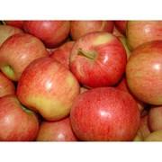 Яблоки.Сорта Гала Маст,Гала Галакси фото