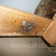 Избавиться от постельных,домашних клопов в Химках фото