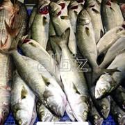 Рыба и рыбные консервы фото