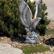 Орел средний фото