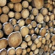 Древесина на дрова фото