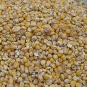 """Семена кукурузы Нора Семенной материал, протравленые. Исходный материал """"Венгерская Селекция"""""""