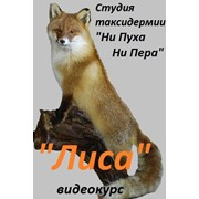 Видеокурс по изготовлению чучела лисы фото