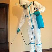 Уничтожение тараканов в общежитиях и малосемейках фото
