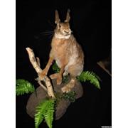 Чучело зайца фото
