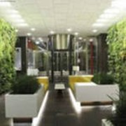 Внутреннее озеленение домов фото