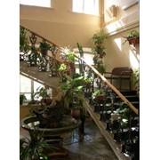 Фитодизайн интерьера, озеленение офиса фото