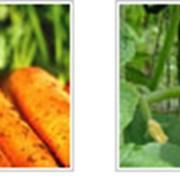 Поставка овощей фотография