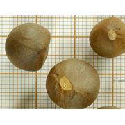 Как сажать семя чая 998