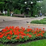 Устройство цветников и клумб №30 фото