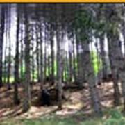 Пейнтбол на Залесской лесополосе фото