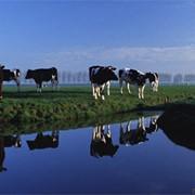 Страхование сельскохозяйственных животных фото