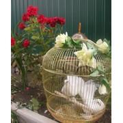 Запуск статных голубей на свадьбу фото