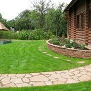 Озеленение газонов