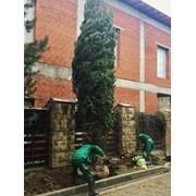 Посадка деревьев и кустарников Щёлково фото