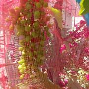 Защита винограда от ос фото