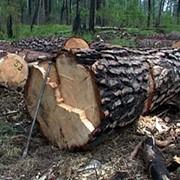 Удаление (срезка) деревьев фото