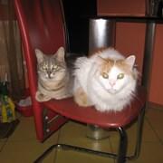 Гостиница для кошек, ЗооГостиница фото