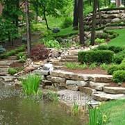 Ландшафтный дизайн( посев и укладка газона, посадка растений). фото