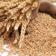 Зерновая продукция фото