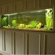 Идея дизайна офиса - аквариум под ключ