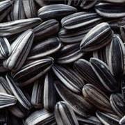 Хранение масличных культур. Хранение семечек фото