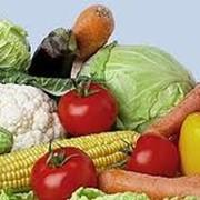Овощи свежие, лук, морковь, капуста, картофель, огурец, свекла фото