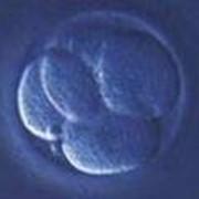 Экстракорпоральное оплодотворение фото
