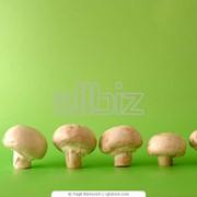 Выращивание грибов фото
