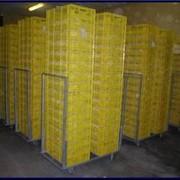 Ящики тележки для перевозки цыплят фото