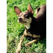 Фотосессии для животных в Курске фото