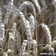 Фумигация растительной продукций фото