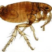 Истребление муравьев. фото
