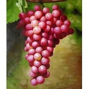 Виноград. фото
