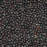 Семена Рапса пищевого фото