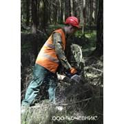 Спил, снос аварийных и проблемных деревьев фото