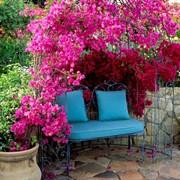 Создание эксклюзивного стильного сада фото
