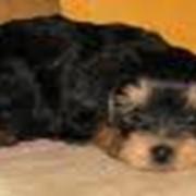 Средства ветеринарные противопаразитные фото