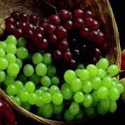 Гидролизованная кожура винограда фото
