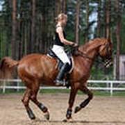 Верховые лошади фото