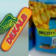 ДКС Декалб( DKC) гибриды семян кукурузы МОНСАНТО фото