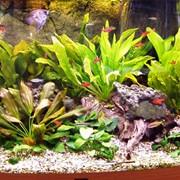 Чистка и сервисное обслуживание аквариумов. фото