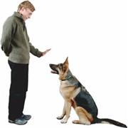Профессиональная дрессировка собак фото