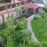Озеленение фото