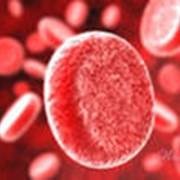 Услуги банка крови фото