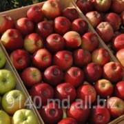 Фрукты Молдова на экспорт