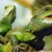 Диагностика и лечение рептилий фото