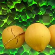 Материал латексированный кокосовый фото
